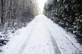 Snowy lane — Stock Photo
