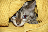 Hiding kitten — Stock Photo