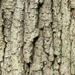 Tree bark — Stock Photo #3843673