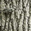 Tree bark — Stock Photo #3844184