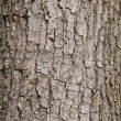 Tree bark — Stock Photo #3844561
