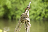 Rope pully — Stock Photo