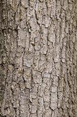 Tree bark — Foto Stock