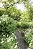 Garden border — Stock Photo