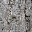 Tree trunk — Stock Photo #3883246