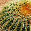 Green summer cactus with yellow prickles, flora — Stock Photo