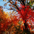 Bright trees and autumn — Stock Photo