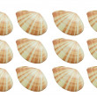 Mollusk,shellfish — Stock Photo #3874507