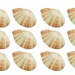 Mollusk,shellfish — Stock Photo