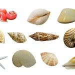 Shellfish — Stock Photo #3874537