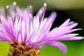 Flower nature — Stock Photo