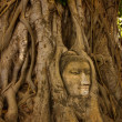 Stock Photo: Stone buddhhead on tree root