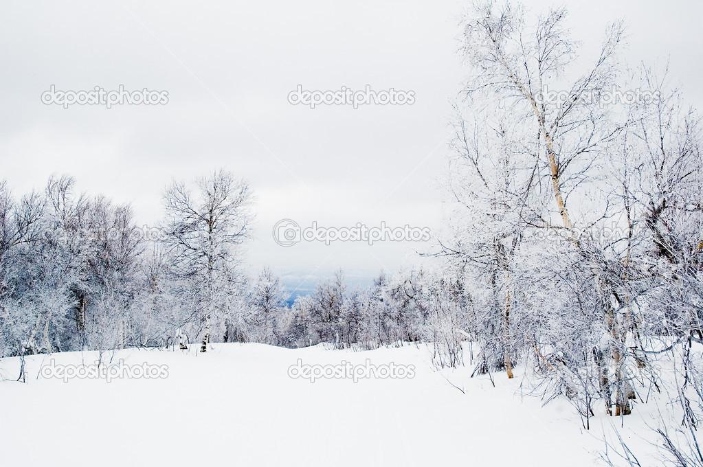 Winter forest in mountain place after snowfall — Stock Photo #3819678
