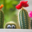 Stock Photo: Hidden funny cactus
