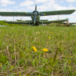 Stock Photo: Airplane on dandelion field