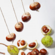 Stock Photo: Conker strings