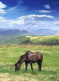 Pastviny — Stock fotografie