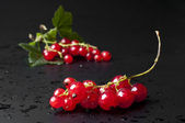 Branch of an red juicy currant — Stock Photo