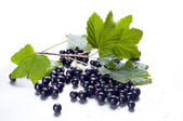 Fresh black currant — Stock Photo