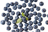 Bilberries on the wite surface — Stock Photo
