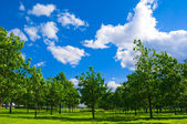 City park with green grass and trees, and the blue sky up above with the wh — Stock Photo