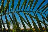 Ramo di un albero di palma da datteri accanto all'hotel egiziano — Foto Stock