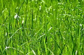 Is bright-green grass — Stock Photo