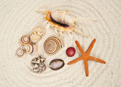 Sea Shell varieties — Stock Photo