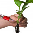 Grafted plant — Stock Photo