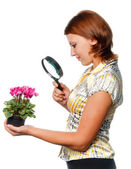 Girl considers cyclamens through a magnifier — Stock Photo