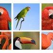 Different tropical birds collection 1. - Stock Photo