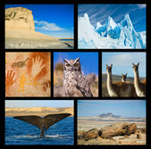 Patagonia highlights collection one. — Stock Photo