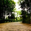 Footpath in botanic garden — Stock Photo #3828365