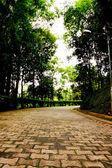 Footpath in botanic garden — Stock Photo
