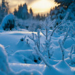Winter forest in Harz mountains, Germany — Stock Photo #3829857