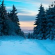Winter forest in Harz mountains, Germany — Stok fotoğraf