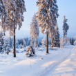 Winter forest in Harz mountains, Germany — Stockfoto