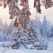 Winter forest in Harz mountains, Germany — Stock Photo #3829977