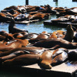 Royalty-Free Stock Photo: Sea lions at Pier 39, San Francisco