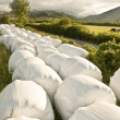 Hay balls in white plastic cover wrap bales stacked for feeding animals — Stock Photo #3860468