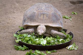 Hungry turtle — Stock Photo