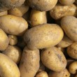New potatoes. Autumn Harvest. — Stock Photo