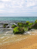 Some Seashore — Stock Photo