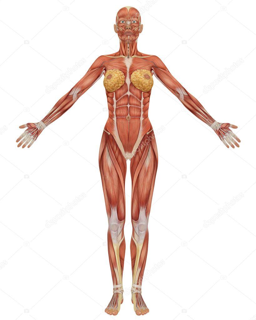 Human Anatomy Side View Female Digitalspacefo