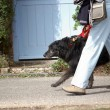 Stock Photo: Walking dog