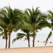 Stock Photo: Coconut tree on beach