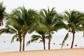 Coconut tree on the beach — Stock Photo