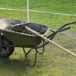 Stock Photo: Wheelbarrow with manure