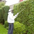 Man exterminating wasps - Stock Photo