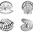 Stock Vector: Shell set